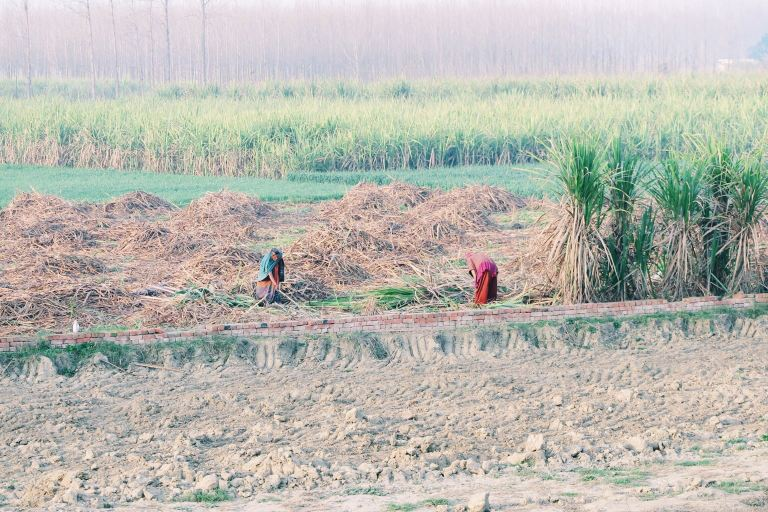 Working the fields. | Delhi, India