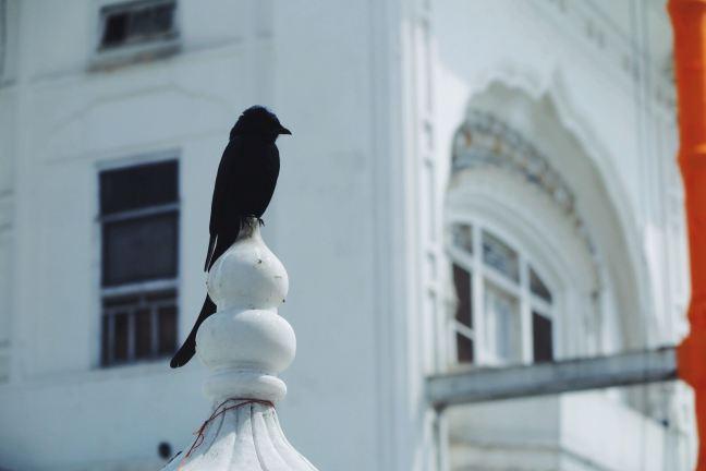 Bird watch | Amritsar, India